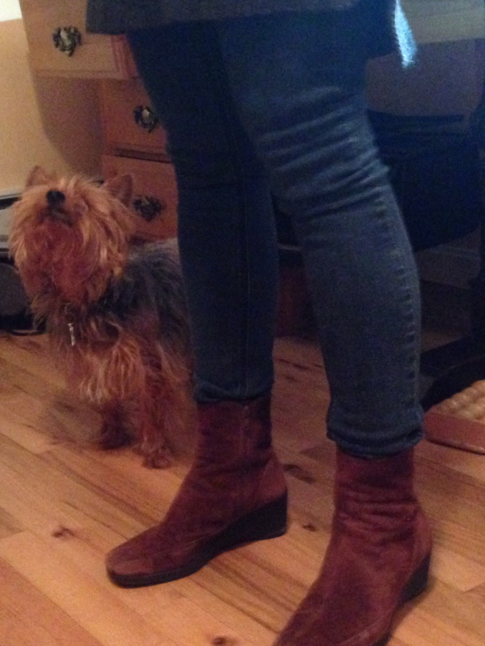 "Okay, I have to admit I am a little jealous about how much our Yorkie ""looks up"" to my wife. I can't get him to do anything!"
