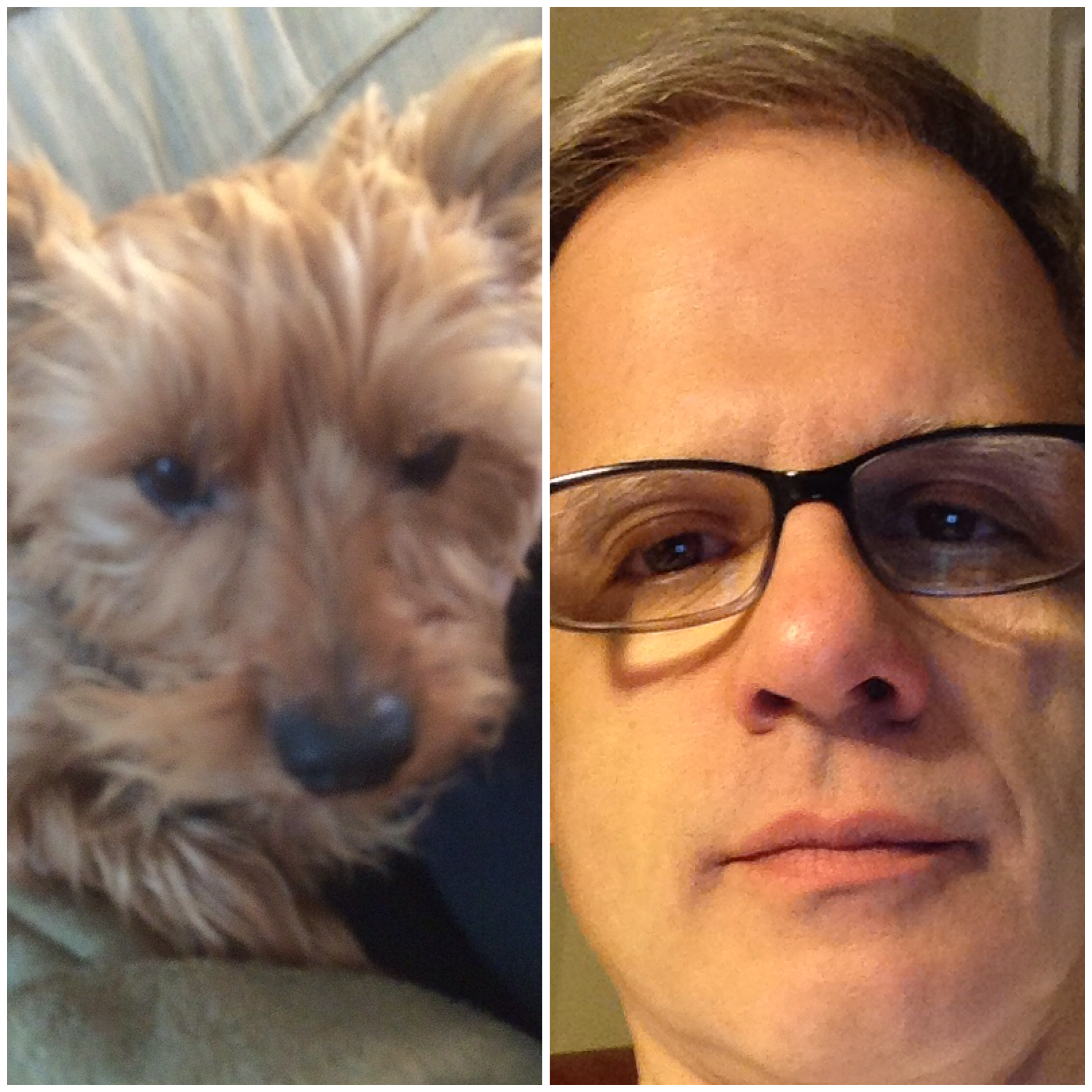 Collage of man and dog resemblance.